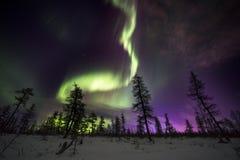 Paisaje de la noche del invierno con el bosque, el camino y la luz polar sobre los árboles Foto de archivo libre de regalías