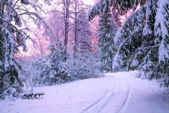 Paisaje de la noche del invierno con puesta del sol en el bosque Imagen de archivo