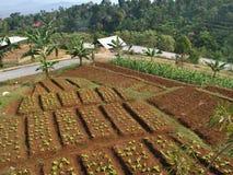 Paisaje de la opinión de la granja Foto de archivo libre de regalías
