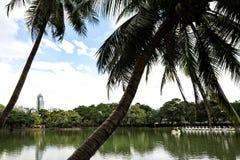 Paisaje de la opinión de la orilla del lago con las palmeras en el parque de Lumphini en B imagen de archivo libre de regalías