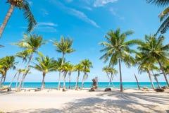 Paisaje de la palmera del coco en la playa tropical Imagen de archivo libre de regalías