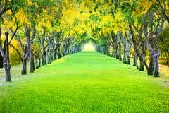 Paisaje de la perspectiva de la flor amarilla floreciente hermosa en suma imagen de archivo