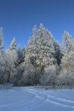 Paisaje de la picea y del abedul nevados del bosque Fotografía de archivo libre de regalías
