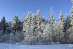 Paisaje de la picea y del abedul nevados del bosque Fotografía de archivo