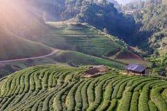 Paisaje de la plantación de té 2000 en Doi Ang Khang Fotografía de archivo