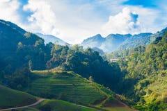 Paisaje de la plantación de té 2000 en Doi Ang Khang Fotos de archivo