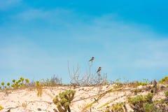 Paisaje de la playa del paraíso de Playa, en la isla de Cayo largo, Cuba Copie el espacio para el texto Fotografía de archivo