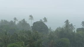 Paisaje de la playa durante huracán del desastre natural El viento fuerte del ciclón sacude las palmeras del coco Lluvia tropical almacen de metraje de vídeo