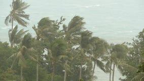 Paisaje de la playa durante huracán del desastre natural El viento fuerte del ciclón sacude las palmeras del coco Tormenta tropic almacen de video