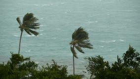 Paisaje de la playa durante huracán del desastre natural El viento fuerte del ciclón sacude las palmeras del coco Tormenta tropic metrajes