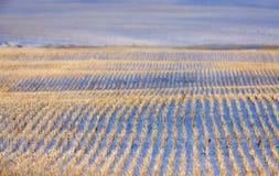 Paisaje de la pradera en invierno Imagenes de archivo