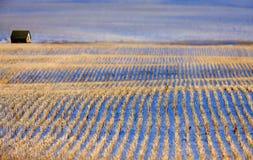Paisaje de la pradera en invierno Fotos de archivo libres de regalías