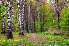 Paisaje de la primavera Imagen de archivo libre de regalías