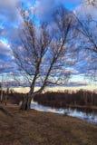 Paisaje de la primavera, abedul en el banco del río Imagen de archivo