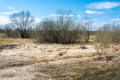 Paisaje de la primavera con año pasado amarillo y x27; hierba de s Foto de archivo libre de regalías