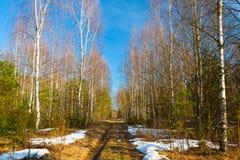 Paisaje de la primavera con el camino y con nieve de fusión en bosque Foto de archivo