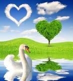 Paisaje de la primavera con el cisne Imagenes de archivo