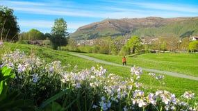 Paisaje de la primavera con flores de cuco rosadas salvajes y una mujer que camina un perro en Green Park foto de archivo