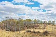 Paisaje de la primavera con las colinas cubiertas por el bosque de abedul en día soleado Fotos de archivo