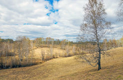 Paisaje de la primavera con las colinas y el bosque de abedul amarillos en día soleado Fotos de archivo libres de regalías