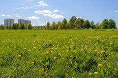 Paisaje de la primavera con los árboles en campo de los dientes de león Fotografía de archivo