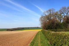 Paisaje de la primavera con los campos del remiendo y los árboles de florecimiento coloridos imagen de archivo