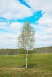 Paisaje de la primavera con un árbol de abedul solo joven entre campo ancho Foto de archivo libre de regalías