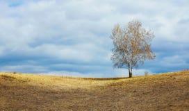 Paisaje de la primavera con un árbol de abedul solo remoto en horizonte Fotografía de archivo