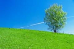 Paisaje de la primavera con un árbol solo en el campo Fotos de archivo libres de regalías