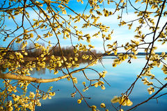 Paisaje de la primavera con un árbol floreciente y el río Foto de archivo libre de regalías