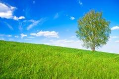Paisaje de la primavera con un un árbol en el campo Foto de archivo