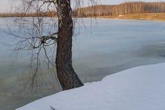 Paisaje de la primavera con vistas al lago y a árboles Fotografía de archivo libre de regalías
