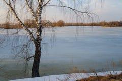 Paisaje de la primavera con vistas al lago y a árboles Imagen de archivo