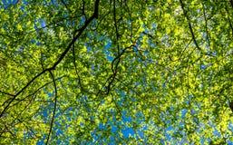 Paisaje de la primavera de árboles Fotos de archivo