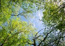 Paisaje de la primavera de árboles Imagenes de archivo