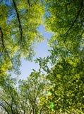 Paisaje de la primavera de árboles Fotografía de archivo libre de regalías