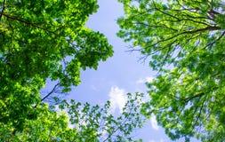 Paisaje de la primavera de árboles Foto de archivo