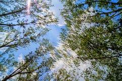 Paisaje de la primavera de árboles contra el cielo Imagen de archivo