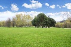 Paisaje de la primavera de la hierba y de los árboles Fotos de archivo