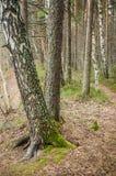 Paisaje de la primavera en la madera Fotografía de archivo libre de regalías