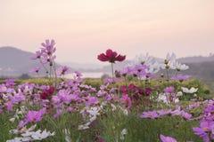 Paisaje de la primavera en la puesta del sol Imagenes de archivo