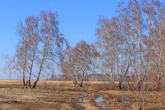 Paisaje de la primavera en la región de Altai de Rusia Foto de archivo libre de regalías