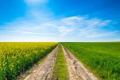 Paisaje de la primavera de la foto con los campos de la violación de semilla oleaginosa en la floración debajo del cielo azul Foto de archivo