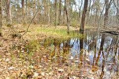 Paisaje de la primavera. Río en el parque nacional. Fotos de archivo