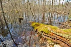 Paisaje de la primavera. Río en el parque nacional. Imágenes de archivo libres de regalías