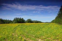 Paisaje de la primavera, región de Novgorod, Rusia Foto de archivo libre de regalías