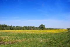 Paisaje de la primavera, región de Novgorod, Rusia Imagenes de archivo