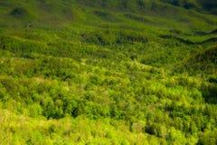 Paisaje de la primavera, ruta verde de las colinas fotos de archivo