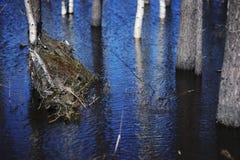 Paisaje de la primavera, troncos de árbol en aguas de inundación Fotos de archivo libres de regalías