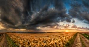 Paisaje de la puesta del sol del campo de trigo imágenes de archivo libres de regalías